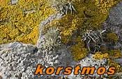 korstmos